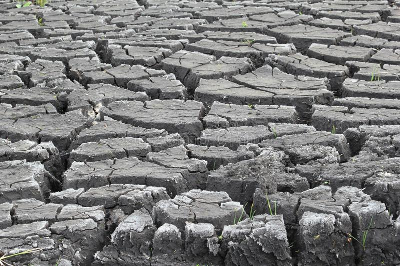 Slits in a draught soil, caused by el Nino royalty free stock photo