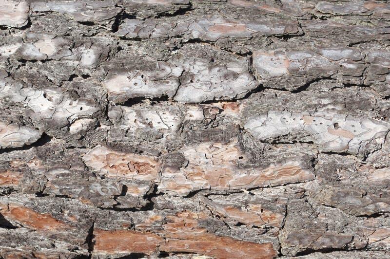Cracked Tree Bark Texture Stock Photo