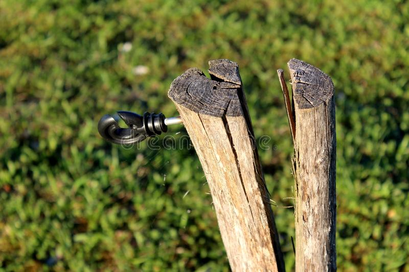 Cracked tree stump with mounted plastic holder for electrical metal wire used for farm animals protection with cobweb and grass. In background stock photo