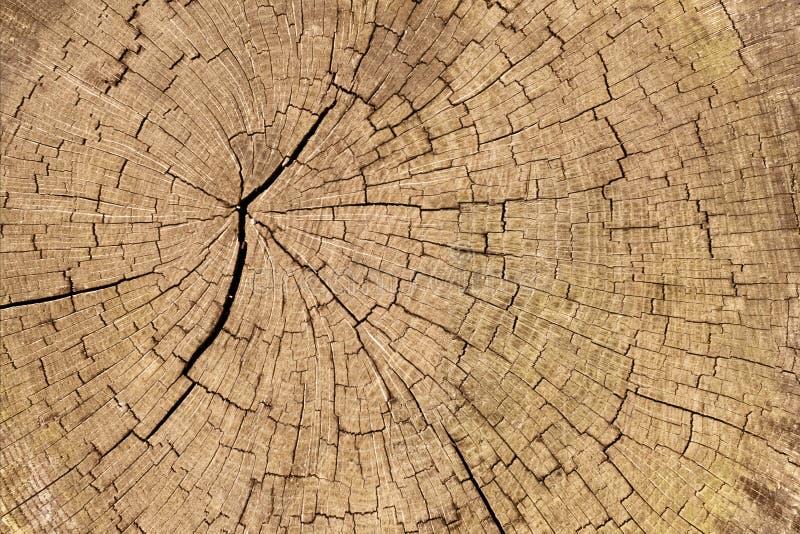 Download Cracked wood stock image. Image of detail, split, wood - 26595207