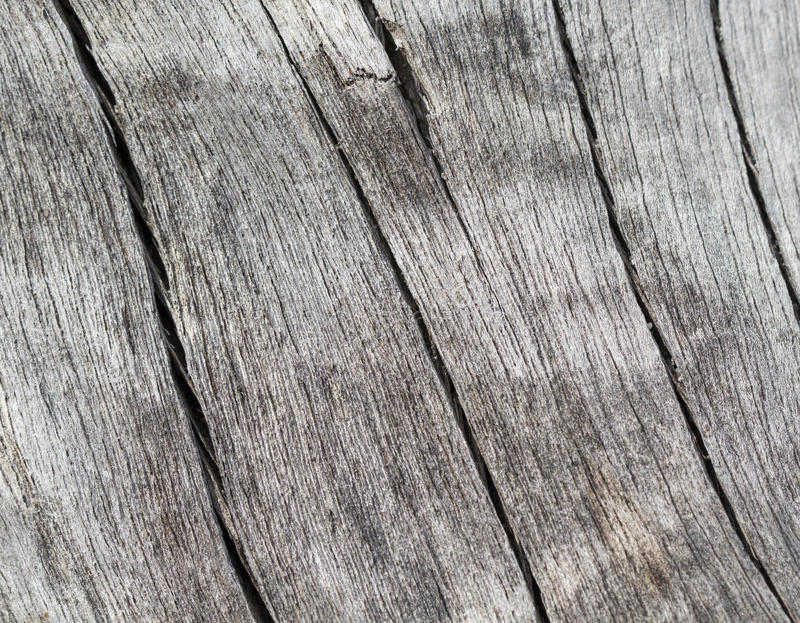 Cracked wood background in warm color palette. Weathered salted tree trunk macro photo. stock photo
