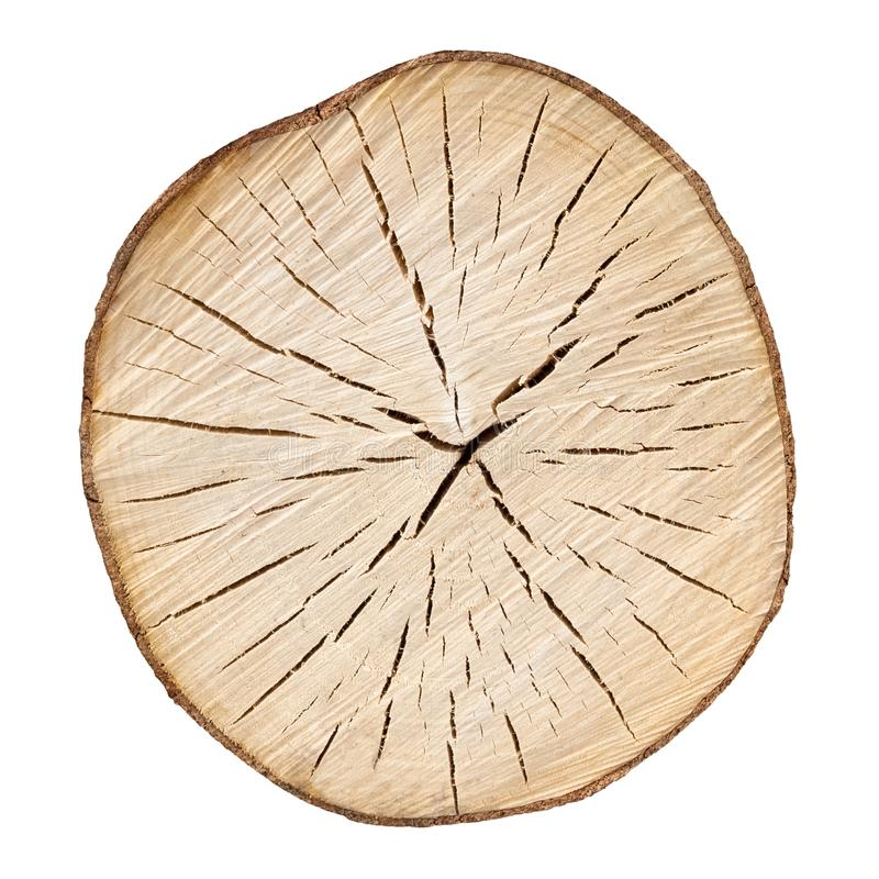 Cracked wooden tree section with rings and texture isolated on white. Circular background. stock images