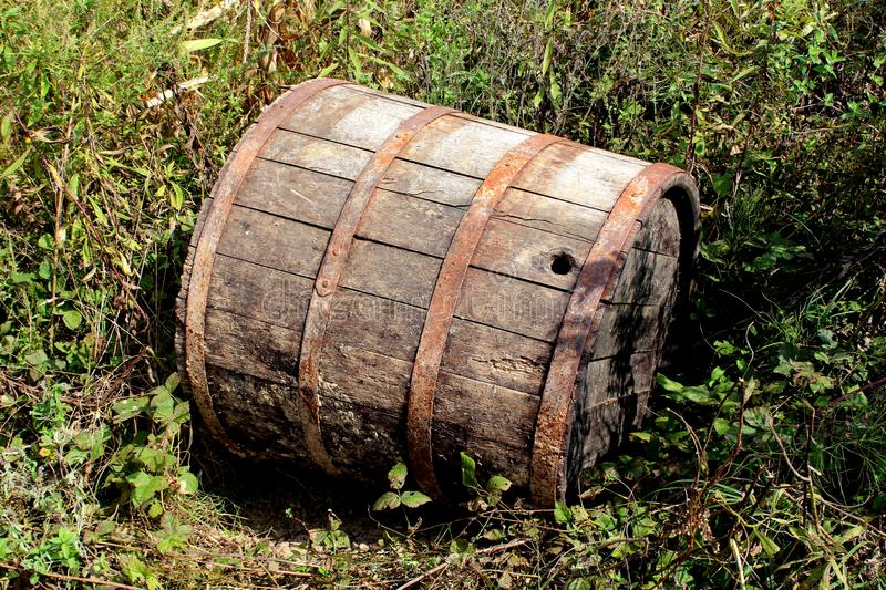 Cracked wooden wine barrel with dilapidated boards and rusted metal frame thrown away in backyard surrounded with high uncut grass. And small plants on warm stock images
