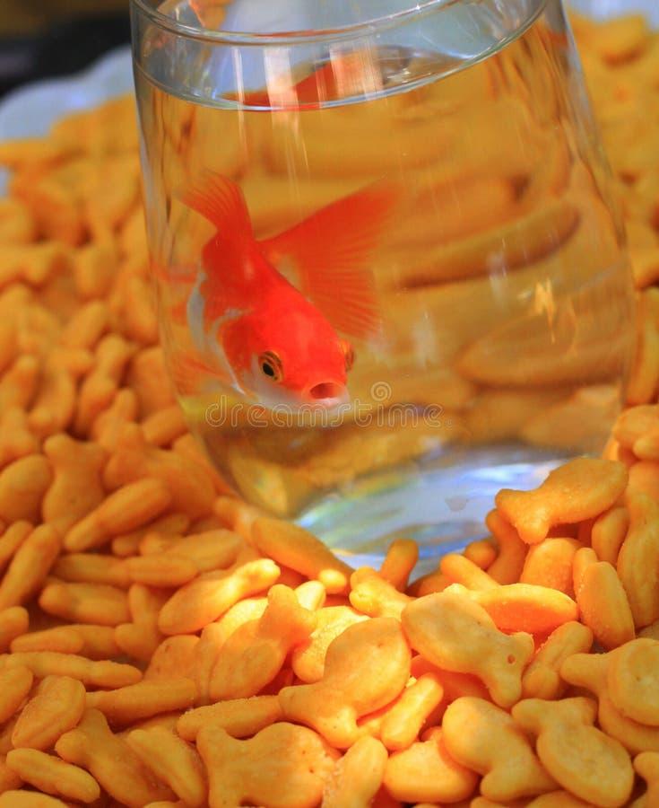Cracker del pesce e del pesce rosso dell'oro immagini stock