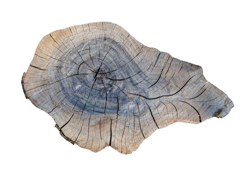 Cracking teak tree slice stock photos