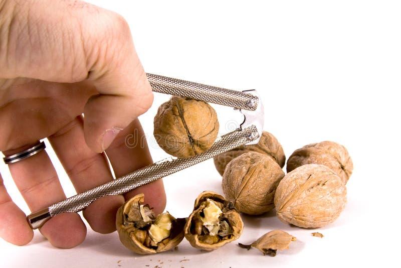 Cracking Walnuts Stock Photo
