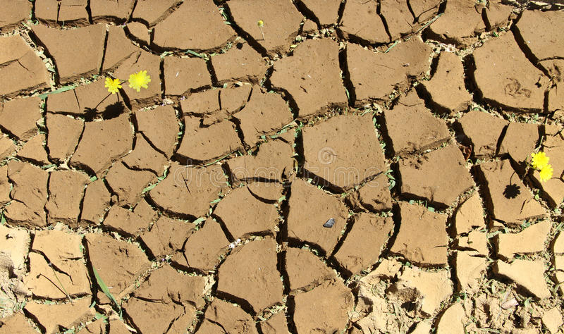 Cracks. Dry cracked earth with signs of life coming through stock image