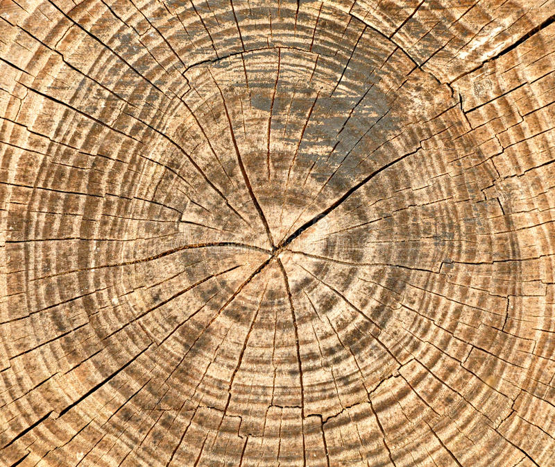 Cracks and annual rings on the saw cut of old tree background stock photos
