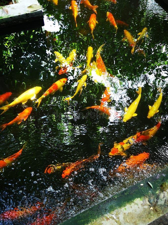 Crafe†‹ryba obrazy royalty free