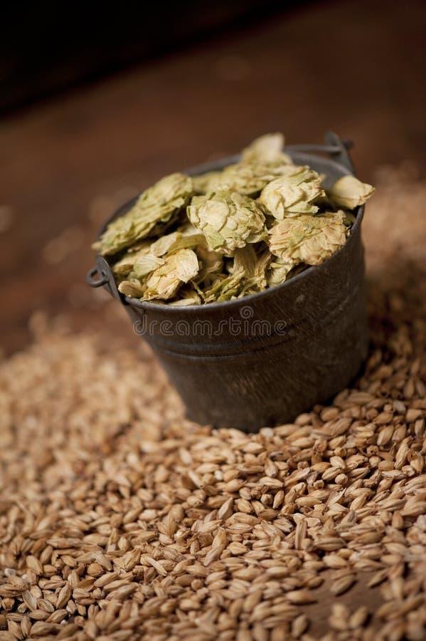 Craft Beer Ingredients royalty free stock images