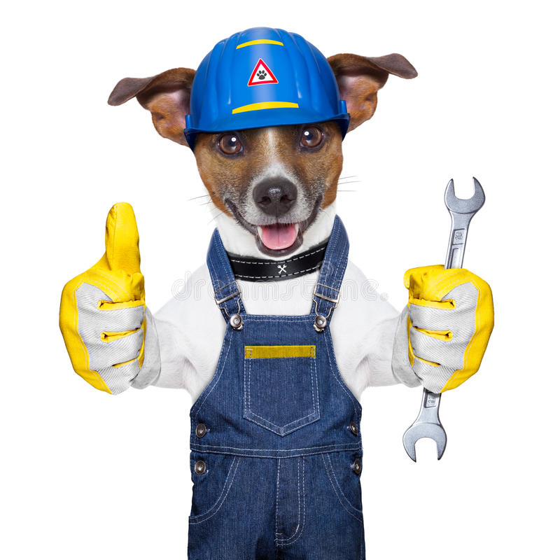 Download Craftsman dog stock photo. Image of russell, okay, progress - 32102100