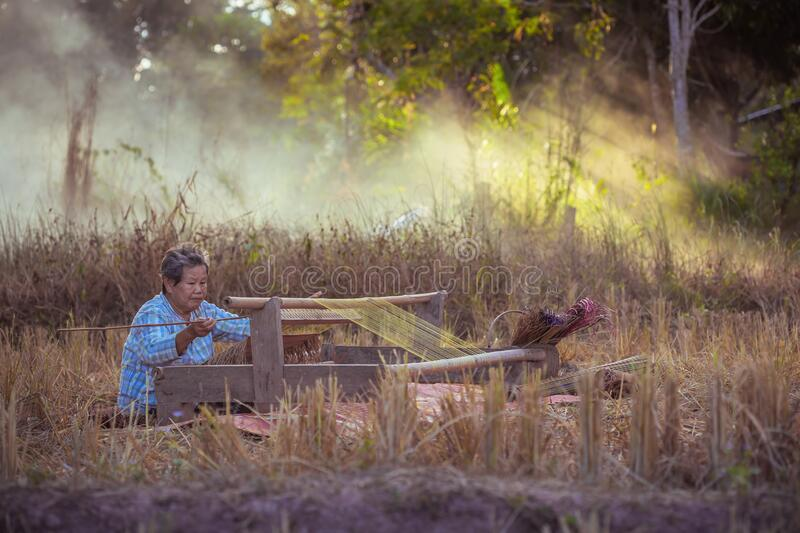 Craftsperson working. Old woman weaving the mat. Senior women making the traditional mat. Old Women weaving mat by straw on rice. Craftsperson working. Old woman royalty free stock image