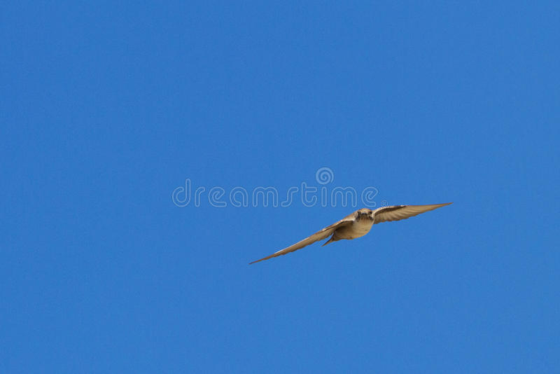 Download Crag Martin stock photo. Image of interesting, color - 38329228