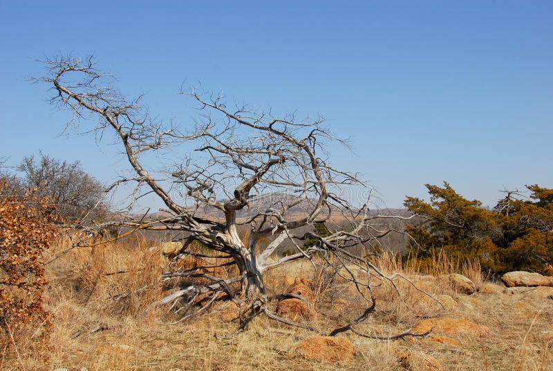 Craggy tree stock image