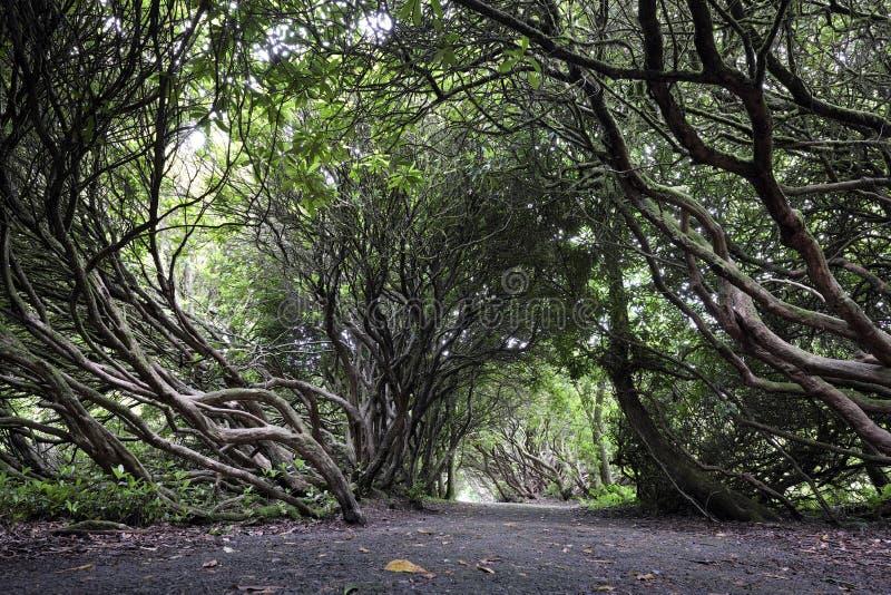 Craig y nrs., bomen, weg royalty-vrije stock afbeelding