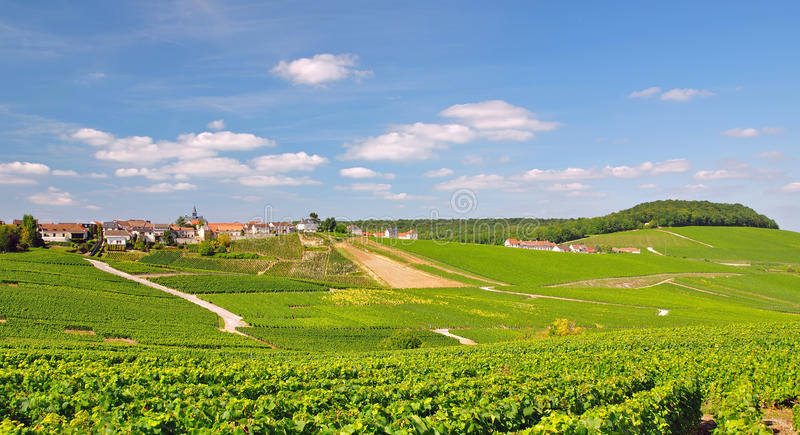 Cramant, Champagne, France royalty free stock photos