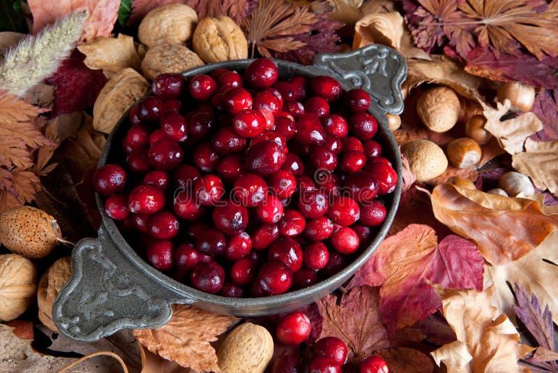 cranberries świezi obraz royalty free