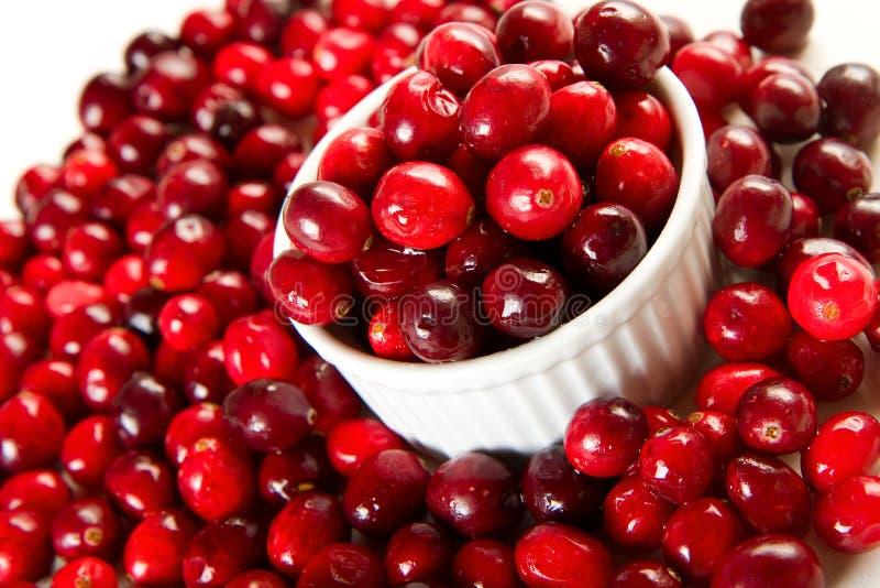 cranberries świezi fotografia stock