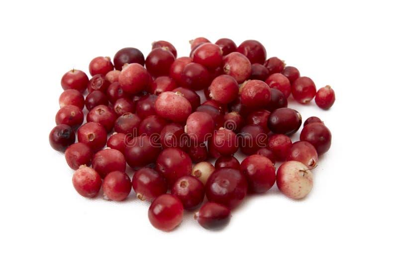 cranberries arkivfoton