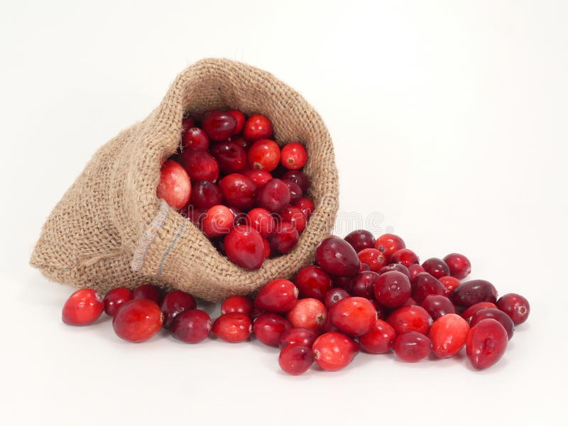 cranberries royaltyfri fotografi