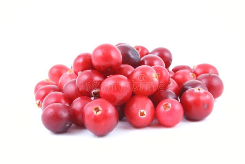 cranberries arkivfoto