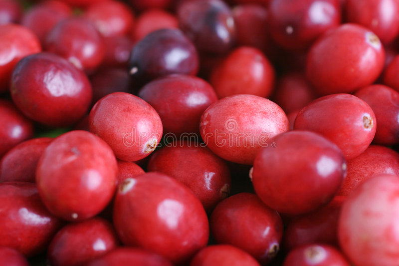 Cranberries. Delicious cranberries ready for christmas stock image