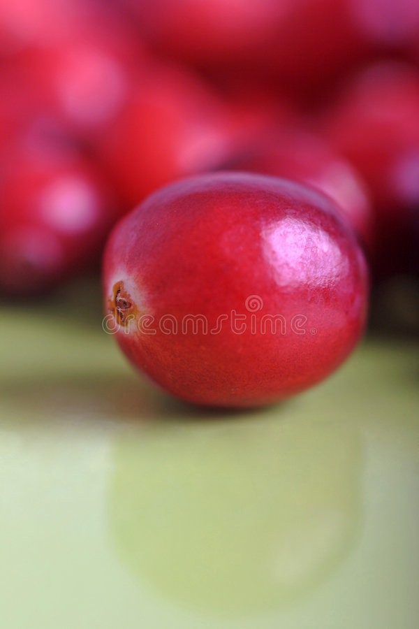 Cranberries. Delicious cranberries ready for christmas, shallow depth of field royalty free stock photo