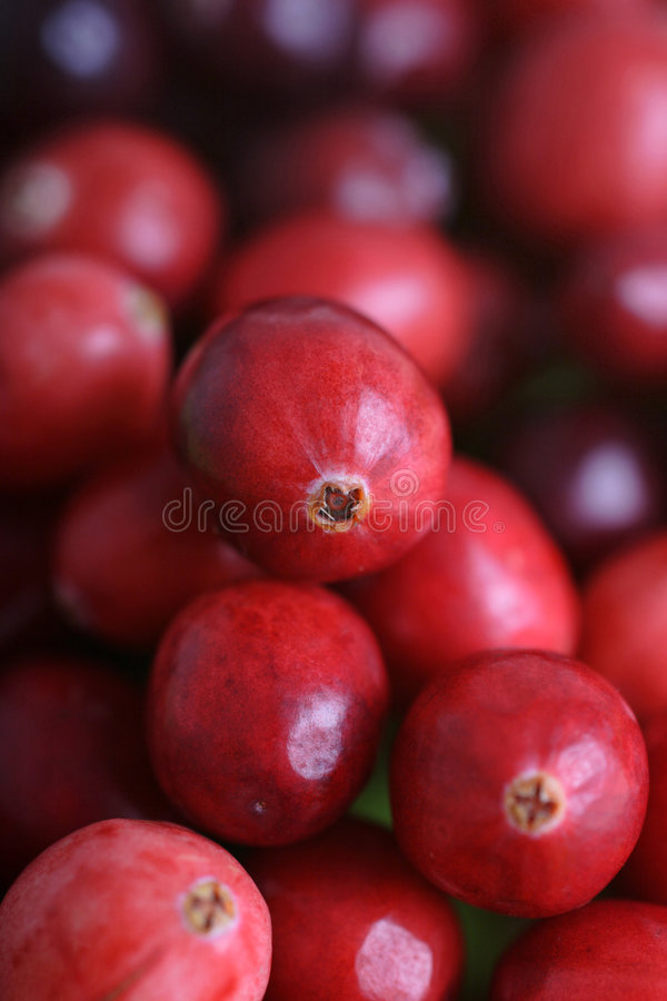 Cranberries. Delicious cranberries ready for christmas royalty free stock photos