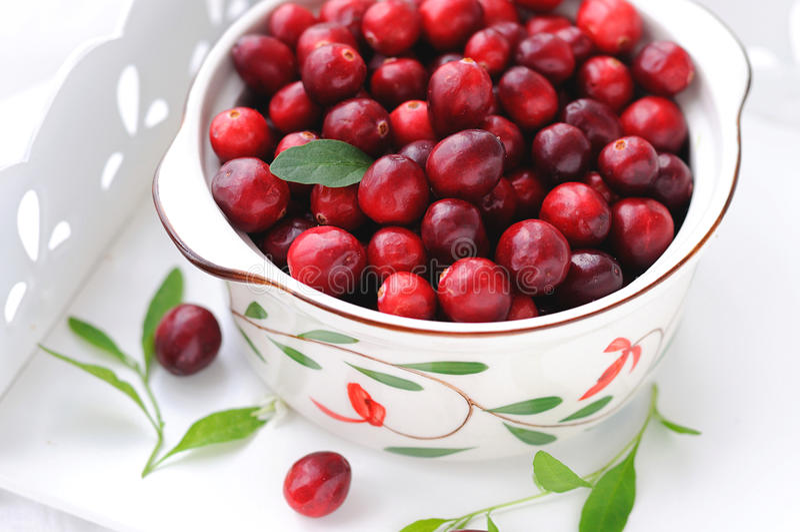 cranberries obraz royalty free