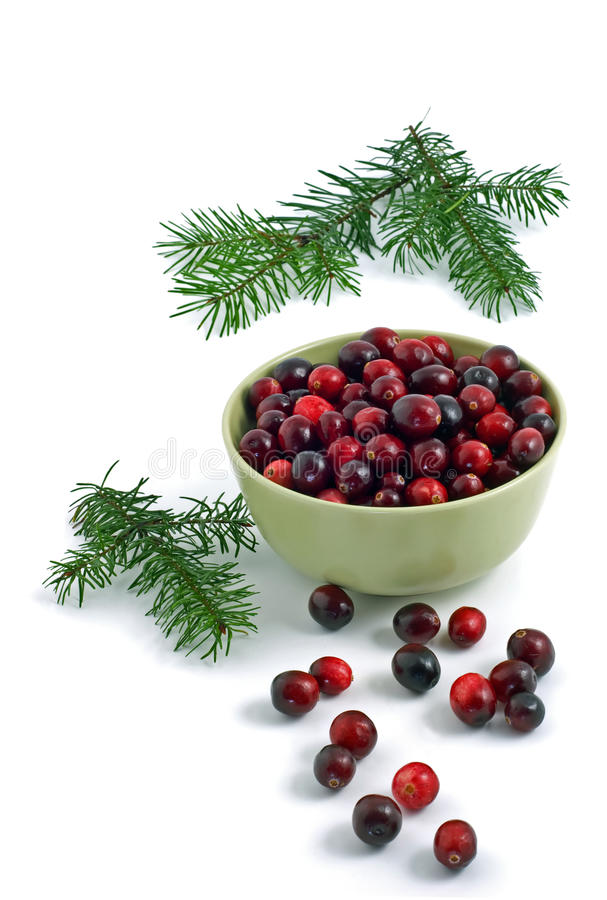 Download Cranberries stock photo. Image of isolated, seasonal - 17371288