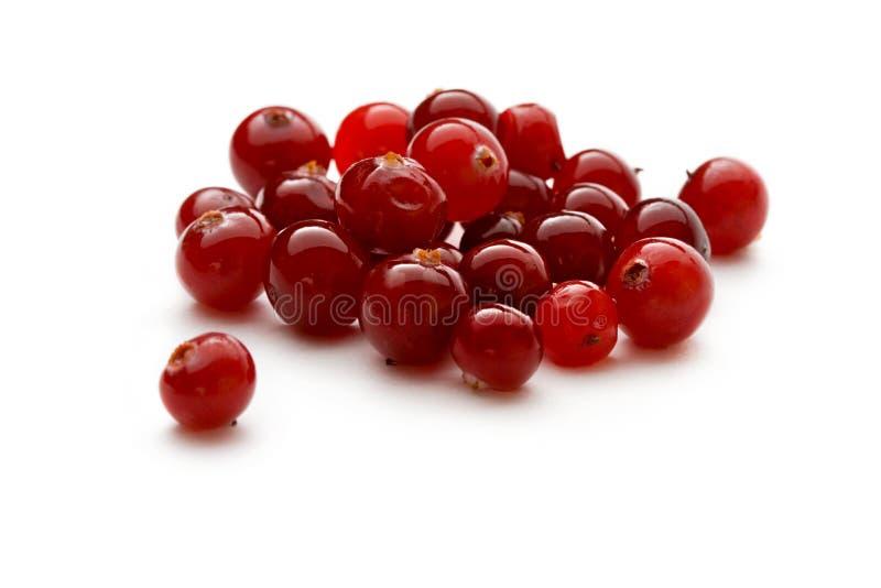 Cranberries royaltyfri foto