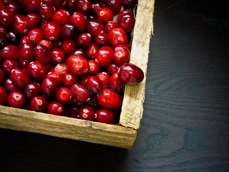 Cranberries. A wooden box full of cranberries royalty free stock photos