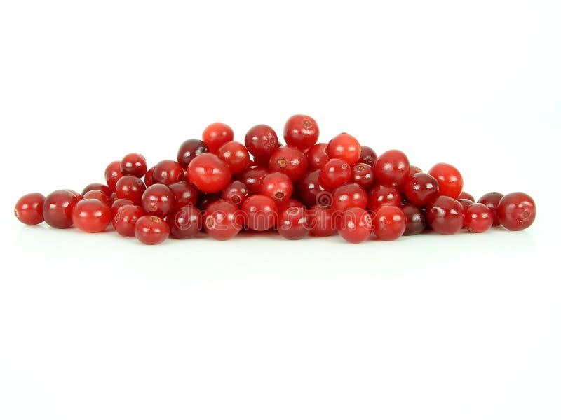 Cranberries stock photo