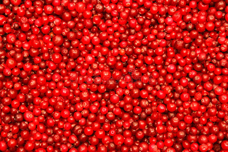 Cranberries obrazy royalty free