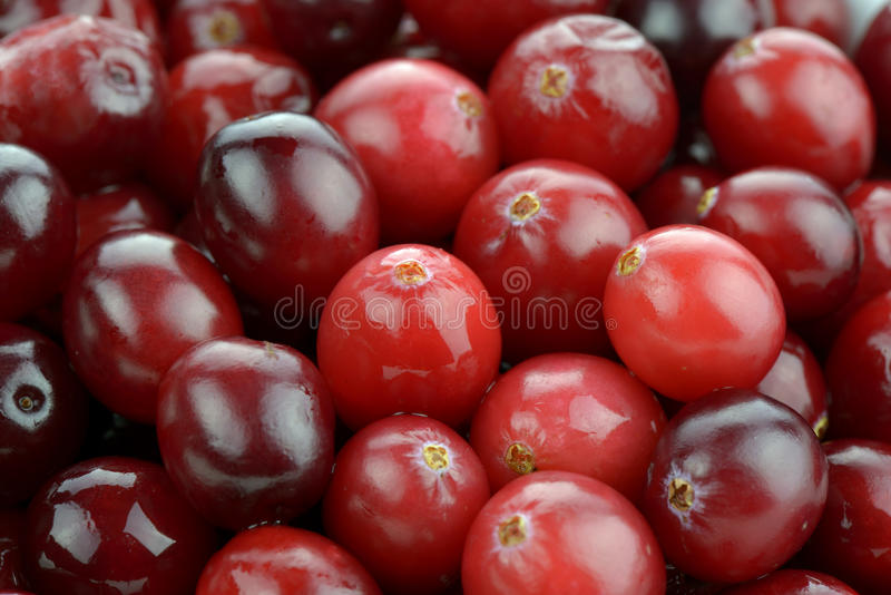 Cranberries. Close-up of fresh cranberries royalty free stock images