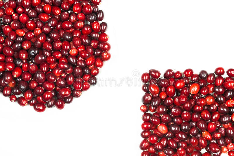 Cranberries obrazy stock