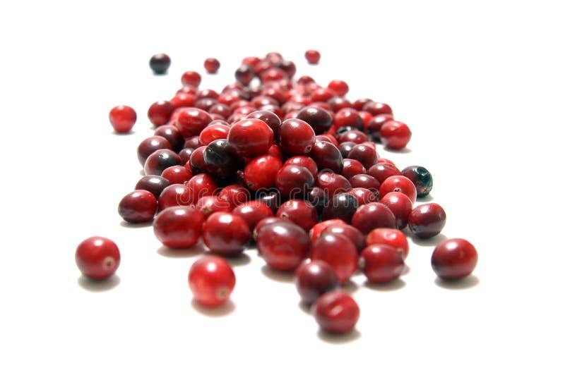 cranberries royaltyfri bild