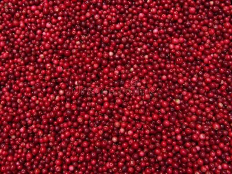 cranberries arkivbilder