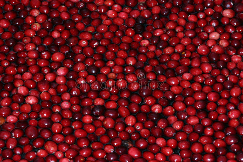 Cranberries. In water stock images