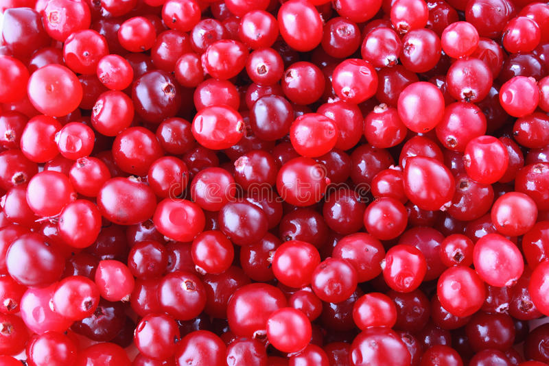 cranberries dojrzali fotografia royalty free