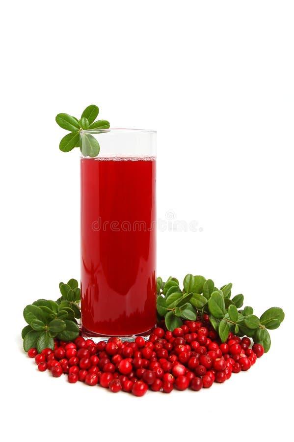 cranberries dricker frukt royaltyfri foto