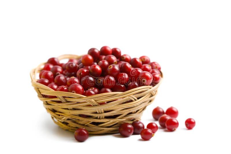 cranberries isolerade moget royaltyfri fotografi