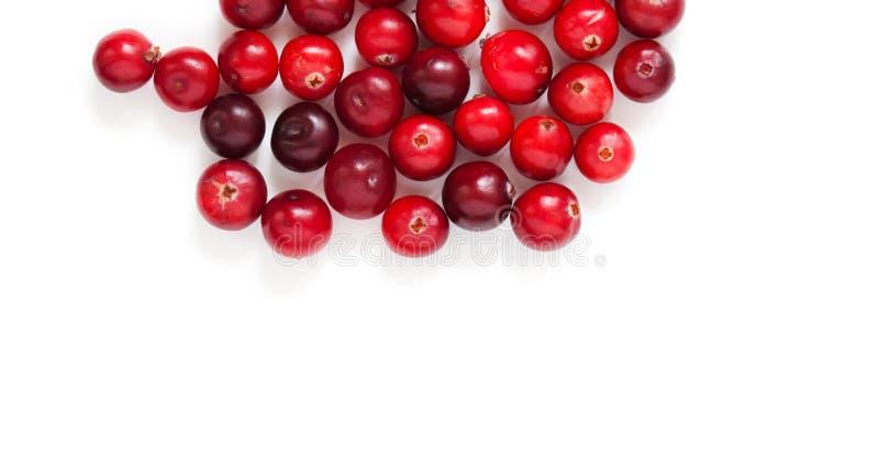 cranberries isolerade white Röda mogna detaljerade skogbär för närbild vit bakgrund som ut klipps kopiera avstånd exponeringsglas royaltyfri foto