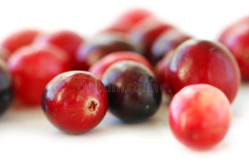 Cranberries macro. Fresh red cranberries macro on white background royalty free stock photo