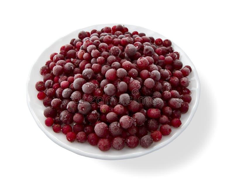 cranberries marznący zdjęcie stock