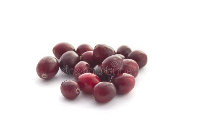 cranberries odizolowywali biel obrazy royalty free