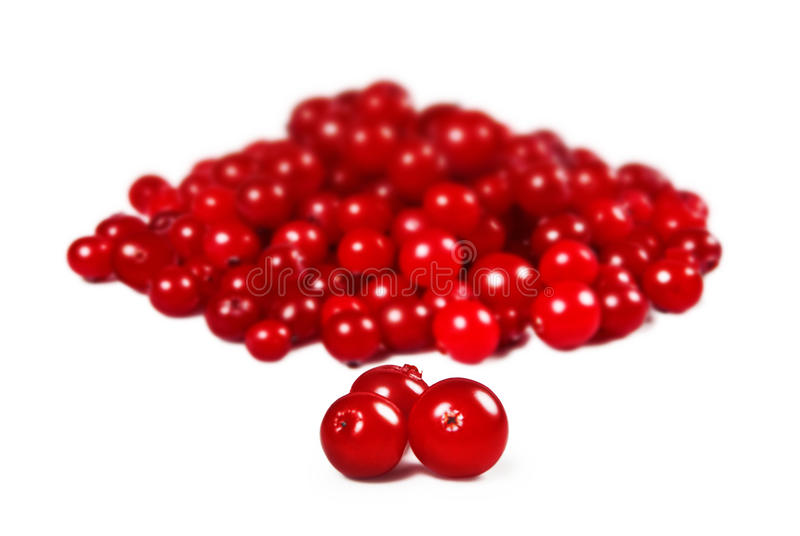 Cranberries over white. Cranberries isolated on white background stock image