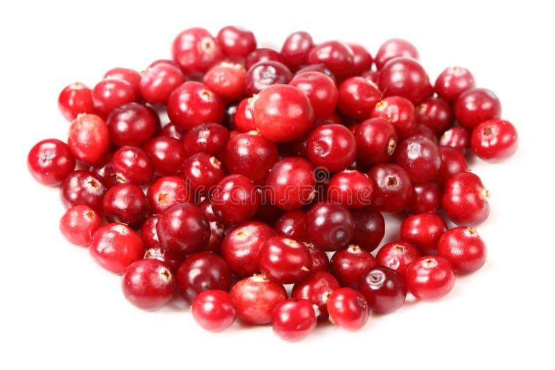 cranberries słodcy fotografia royalty free