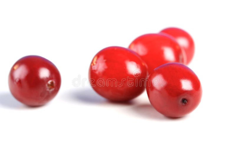 Cranberries. Studio shot of cranberries on white background royalty free stock image