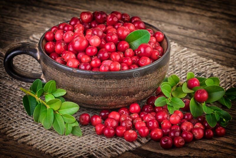 Cranberries Vignette, Vintage Still Life. Ripe cranberries vignette vintage style royalty free stock image